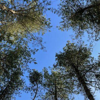 Skogsfloating open space