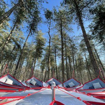 Skogsfloating rustgevende plek vertrouwen veiligheid